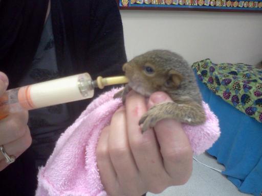 Rescued squirrel - Courtesy WTKR