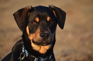 Hoagie at Best Friends of Pets (2014)
