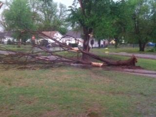 Anadarko tree uprooted - Gina Taylor