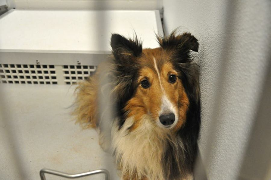 LOST - Dog found after Moore tornado - Central OK Humane Society