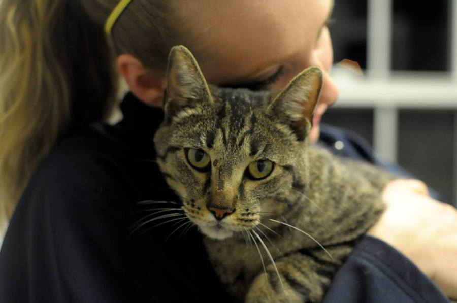 LOST - Cat found after Moore tornado - Central OK Humane Society