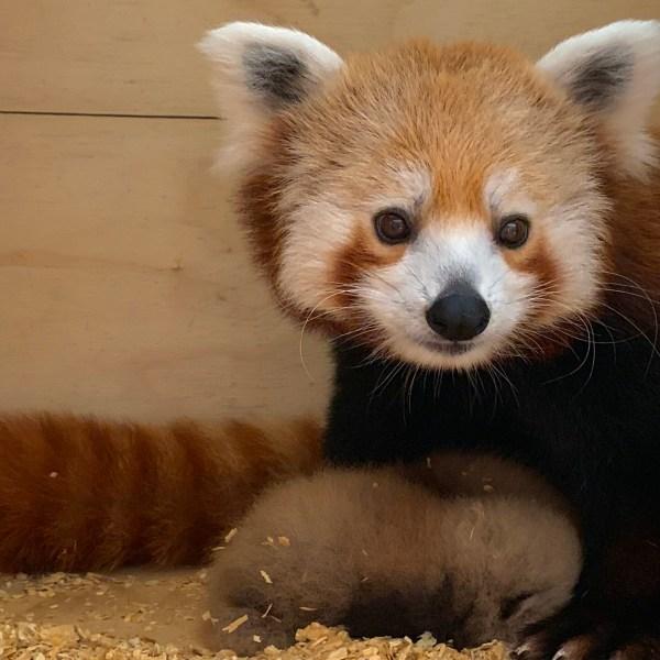 Courtesy: Oklahoma City Zoo