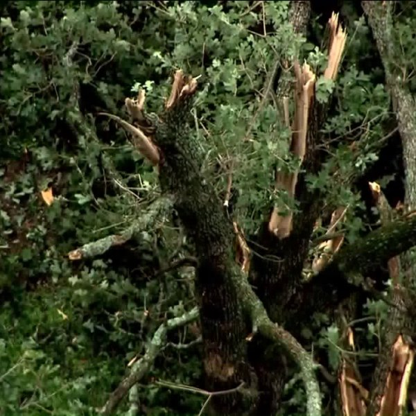 Tree damage caused by storms
