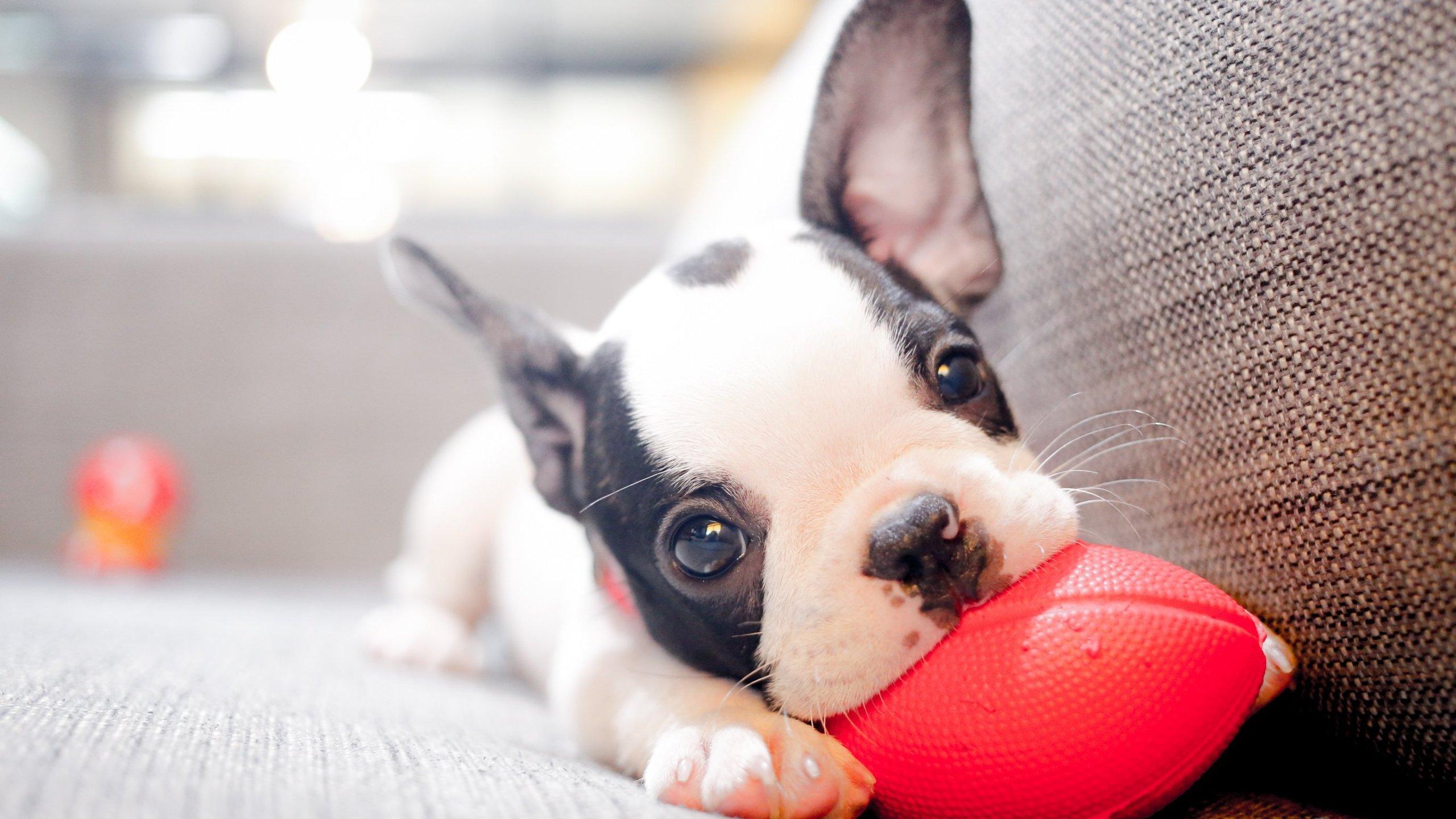 Dogs help us live longer