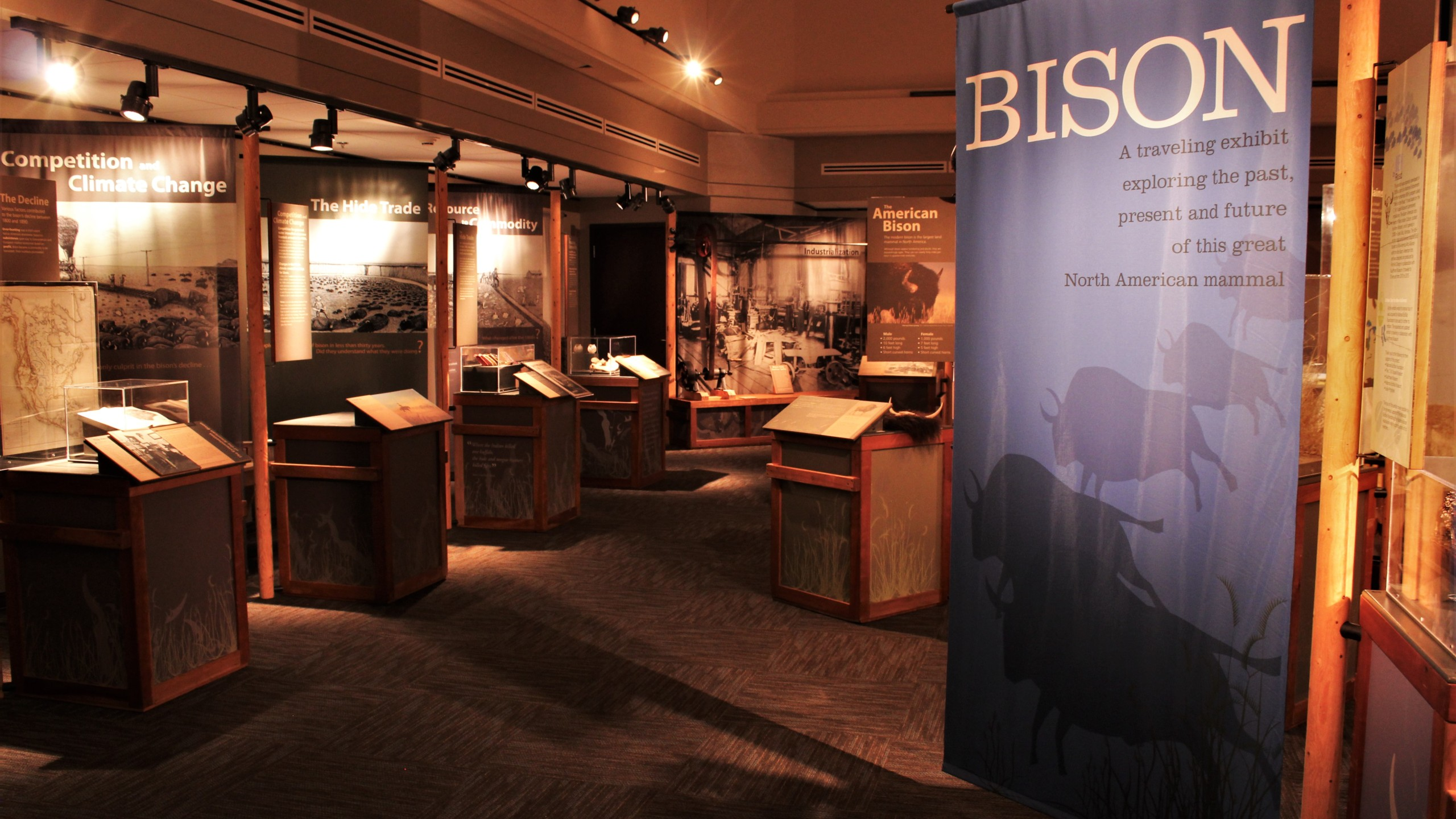 The Bison Exhibit at the Cherokee Strip Regional Heritage Center
