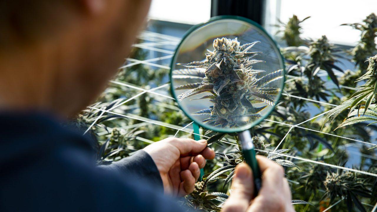Officials set laboratory deadline for medical marijuana products