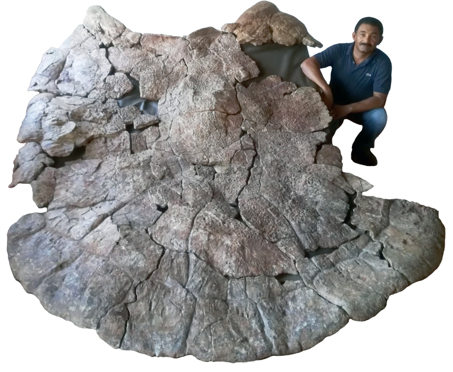Venezuelan Palaeontologist Rodolfo Sánchez and the shell of the male giant turtle.