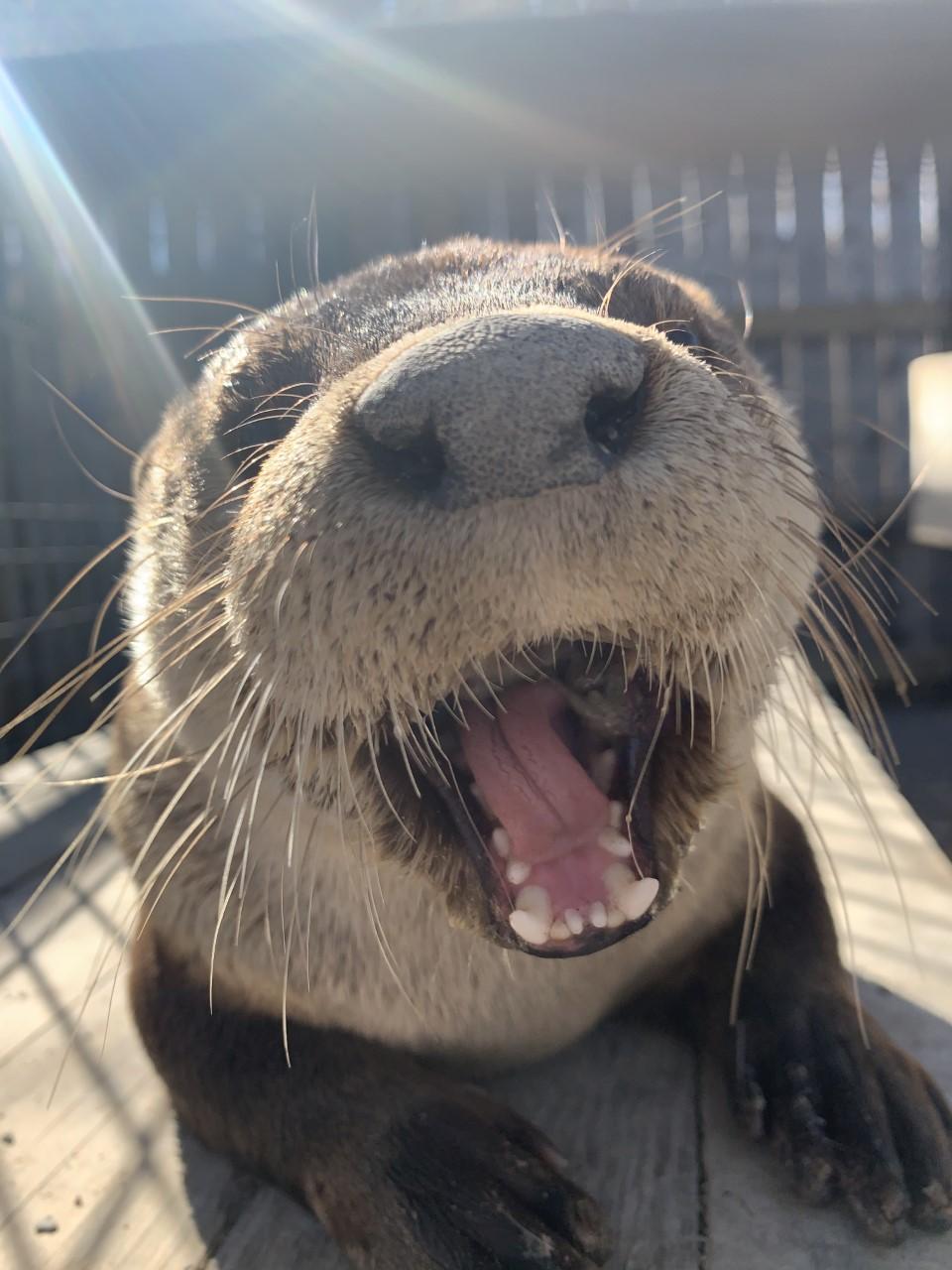 North American River Otter Habitat Exhibit