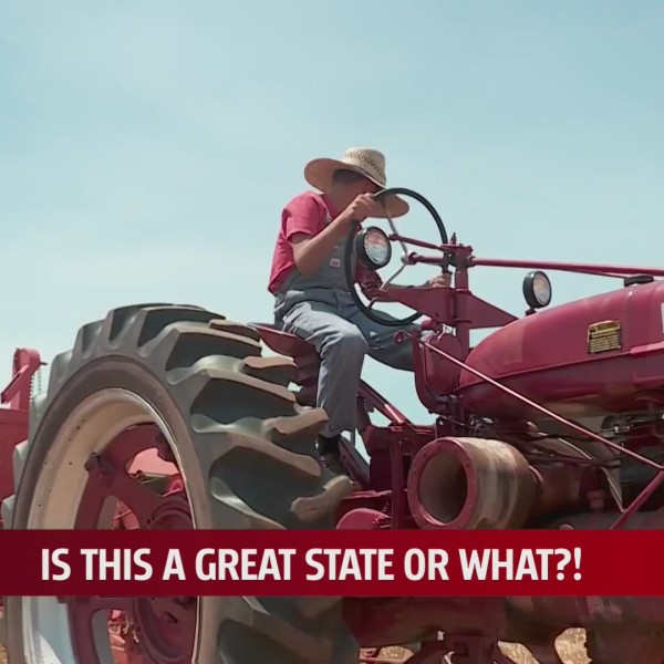 Young boy sits on tractor to harvest wheat