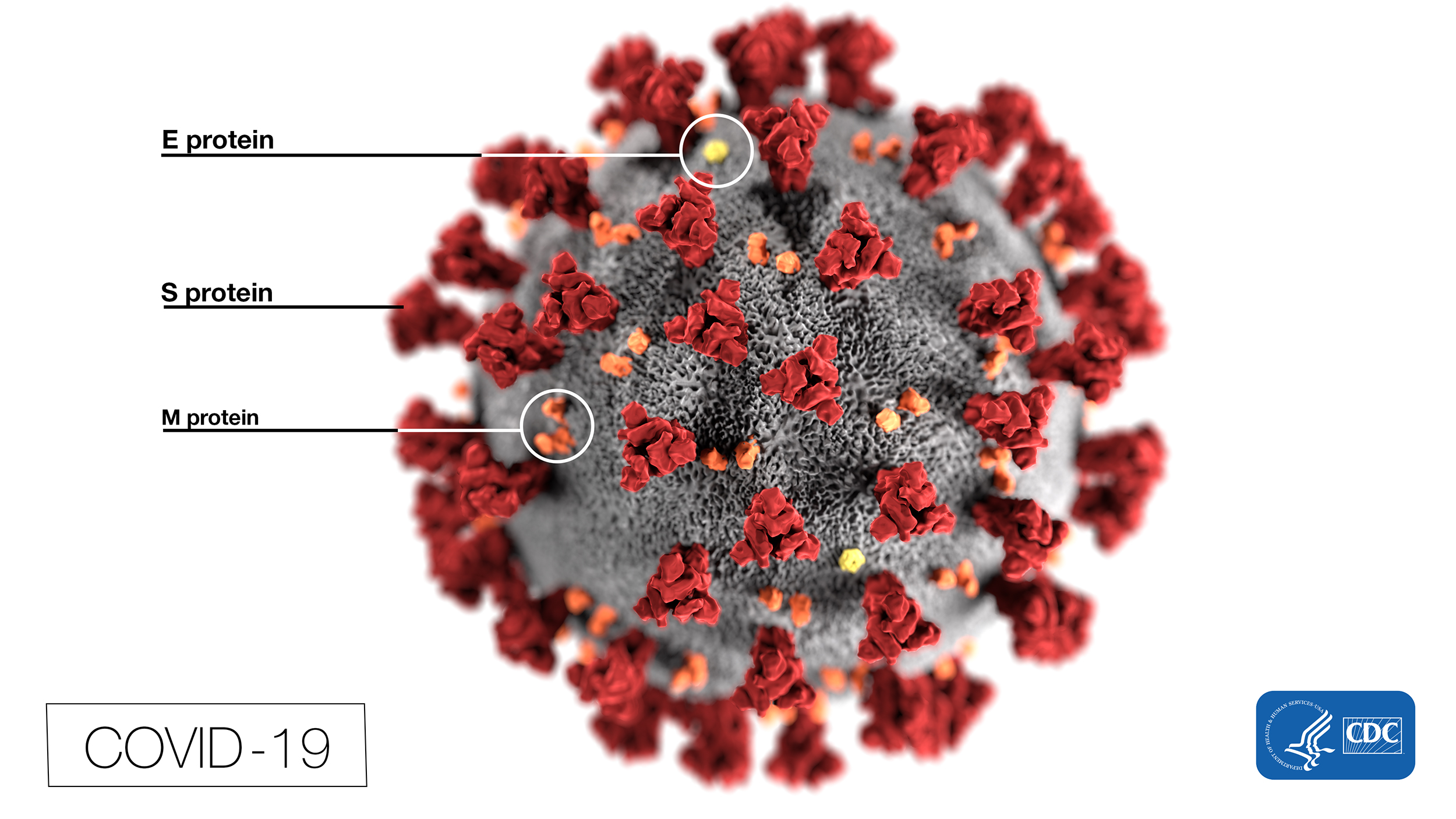 Novel coronavirus illustration (Credit: CDC)