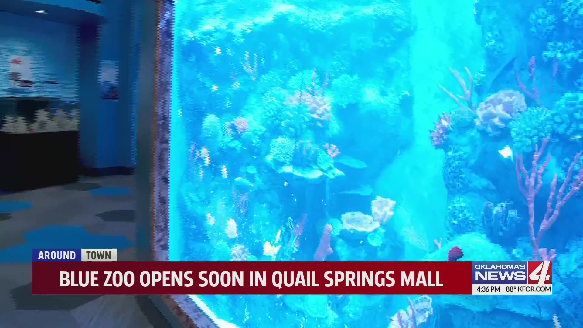 Blue Zoo in Quail Springs Mall