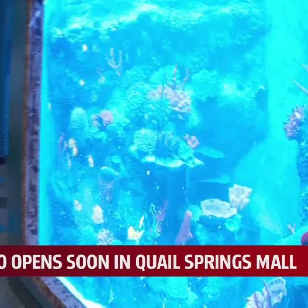 Blue Zoo in Quail Springs Mall