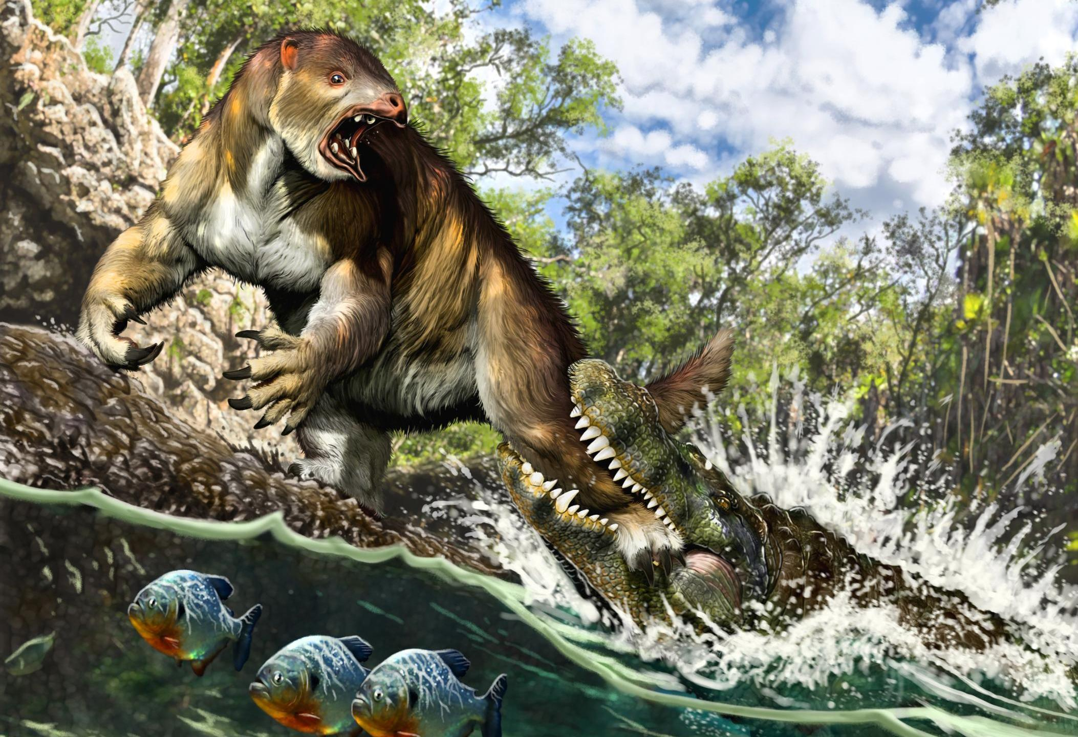 This artist's illustration shows a young Purussaurus attacking a ground sloth in Amazonia 13 million years ago. Credit: Jorge A. González