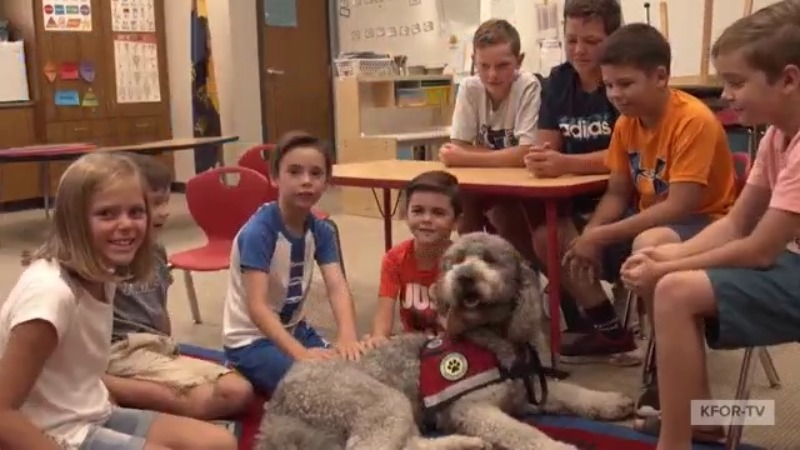 Picture of therapy dog at school with students