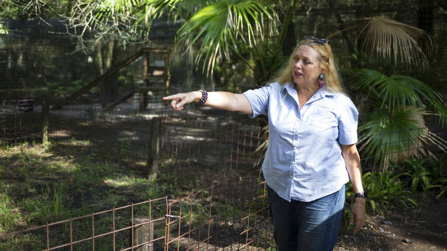 """ILE - In this July 20, 2017 file photo, Carole Baskin, founder of Big Cat Rescue, walks the property near Tampa, Fla. Baskin was married to Jack """"Don"""" Lewis, whose 1997 disappearance remains unsolved and is the subject of a new Netflix series """"Tiger King."""" (Loren Elliott/Tampa Bay Times via AP, File)"""