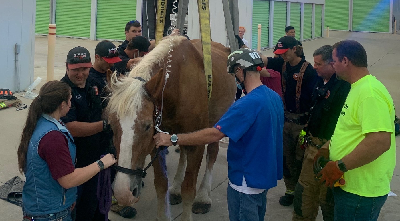 Oklahoma City firefighters, an equine veterinarian and a local wrecker service rescued a Belgian Draft horse who pulls carriages in the Bricktown area.