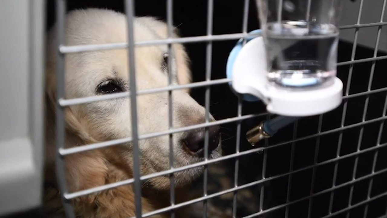 Oklahoma veterinarians in need of canine, feline blood donors