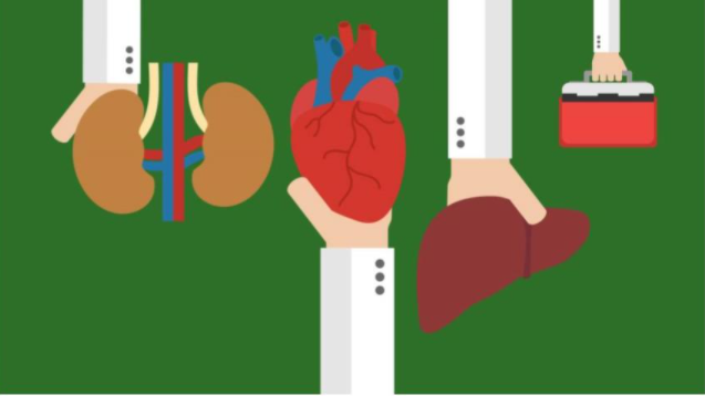 illustration of hands holding lungs, heart, liver, and organ donation box