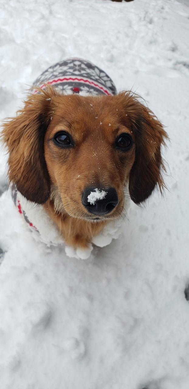 Annie in the snow