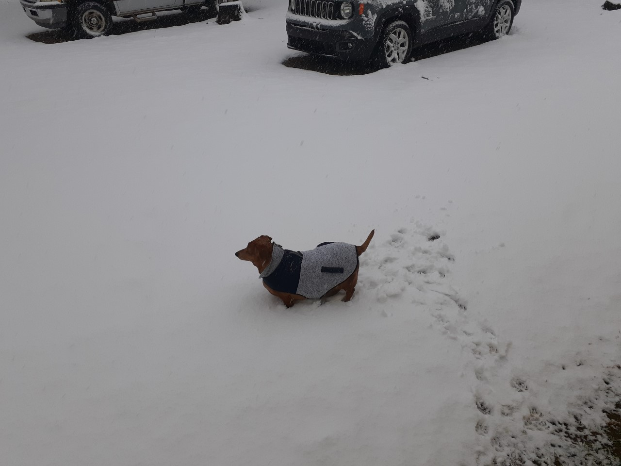 Jack playing in the snow in Jacktown