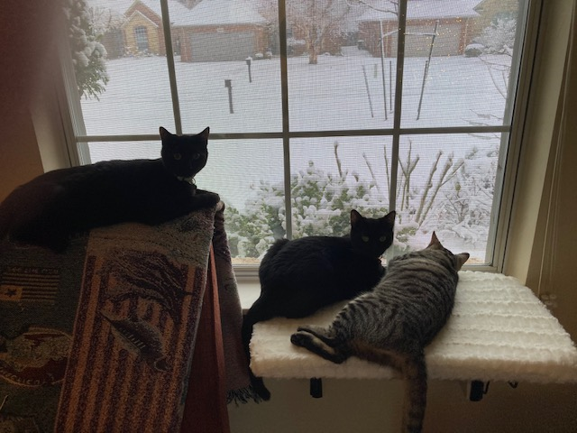 Jellybean, Pistol, Tiger watching the snow by Gail Hamilton