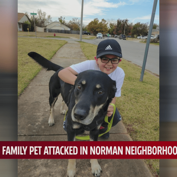 Dog attack in Norman