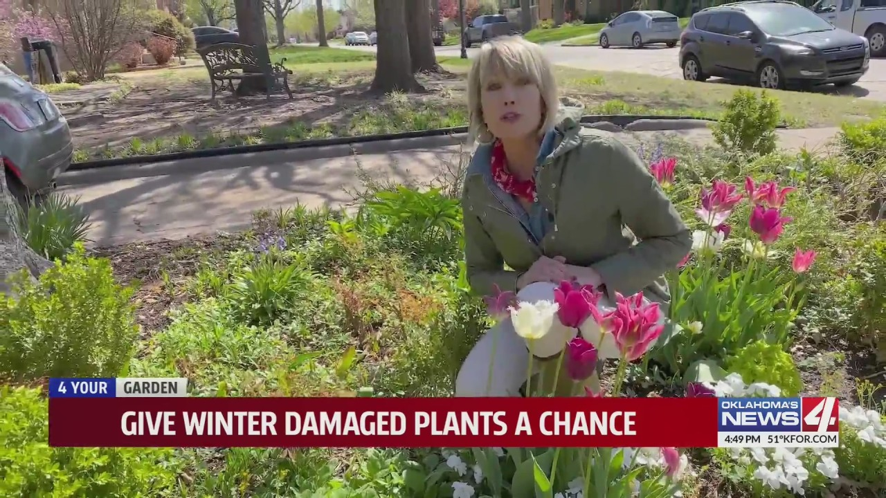 4 Your Garden: Give winter-damaged plants a chance
