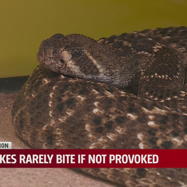 Be on the lookout for snakes ahead of holiday weekend
