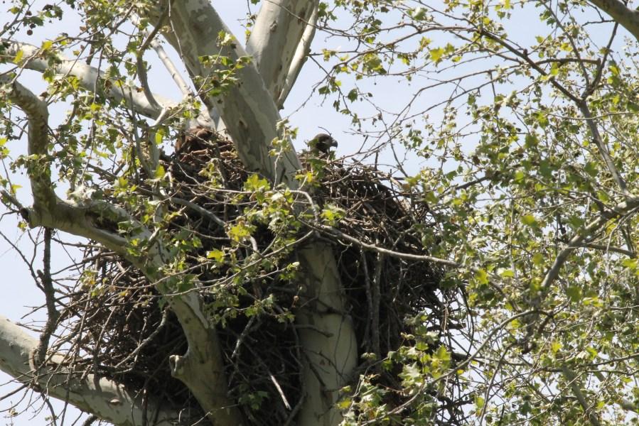 Eagle Nest April 25, 2021