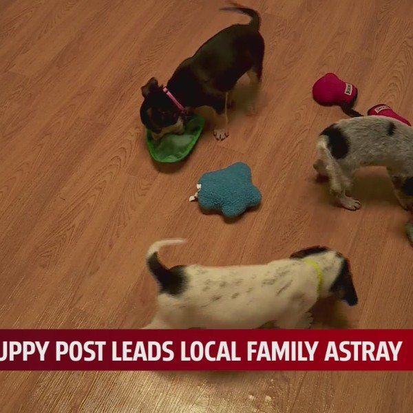 Family led astray by fake puppy post
