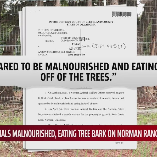 Hundreds of animals, dozens of species found malnourished, resorting to eating tree bark on Norman ranch