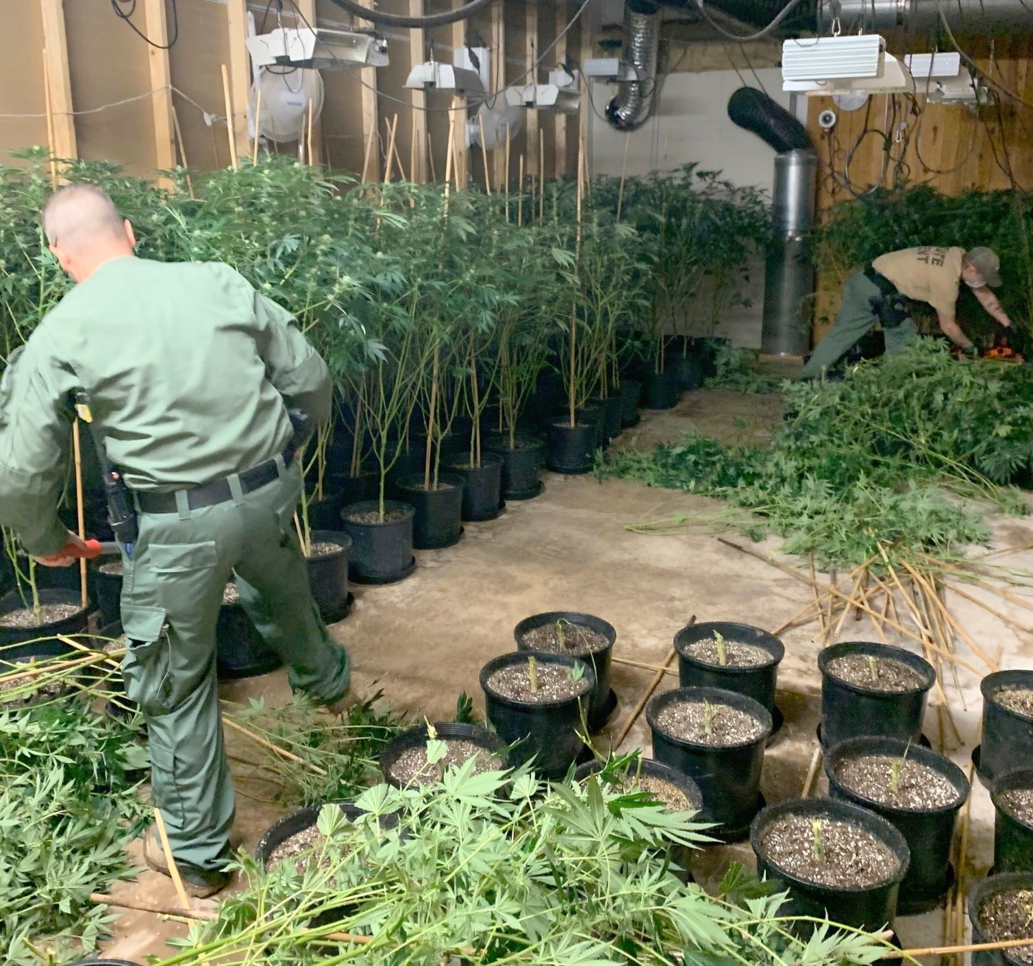 Logan County illegal grow operation