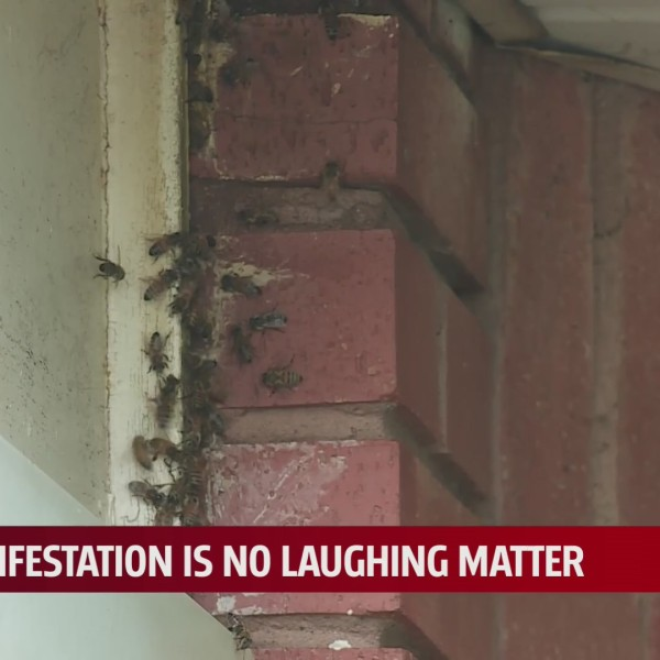 Oklahoma man wants bees invading his home gone, not killed