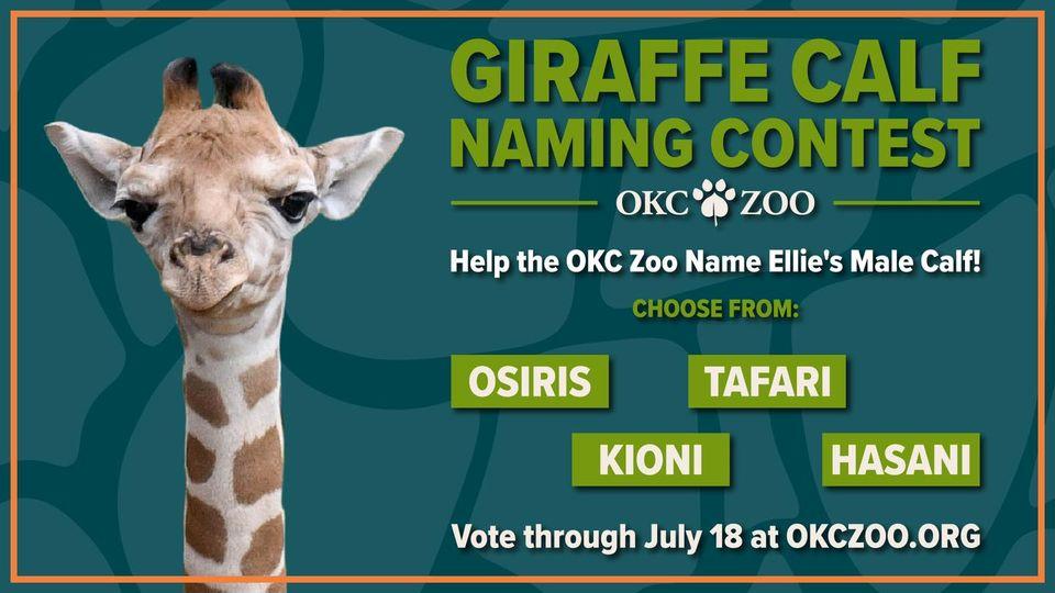 Oklahoma City Zoo's giraffe calf naming contest
