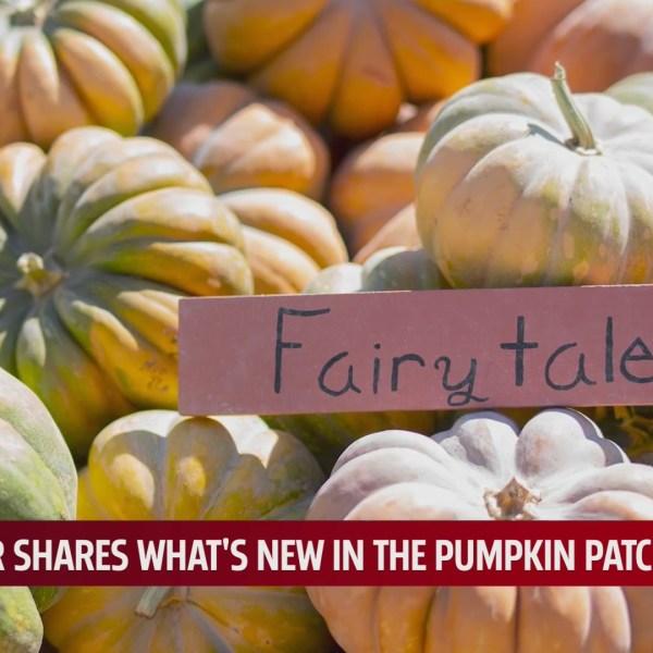 fairytale pumpkins sit in a pile