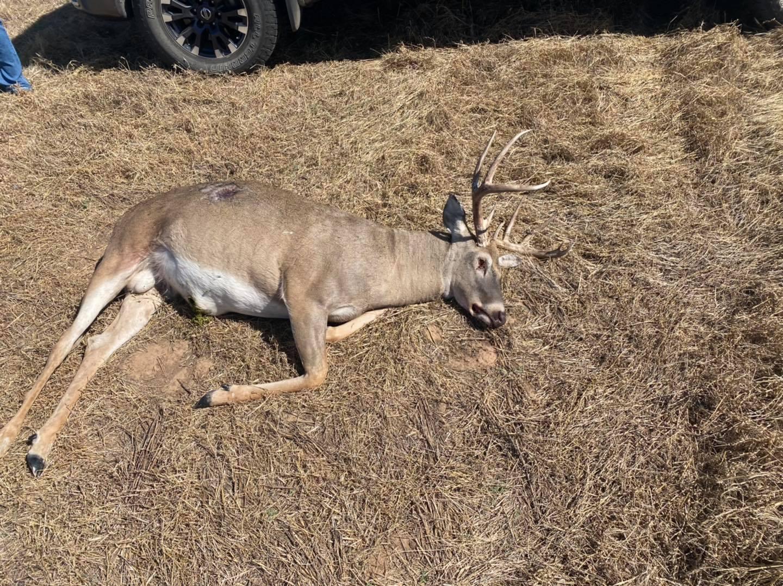 Buck poached in Alfalfa County