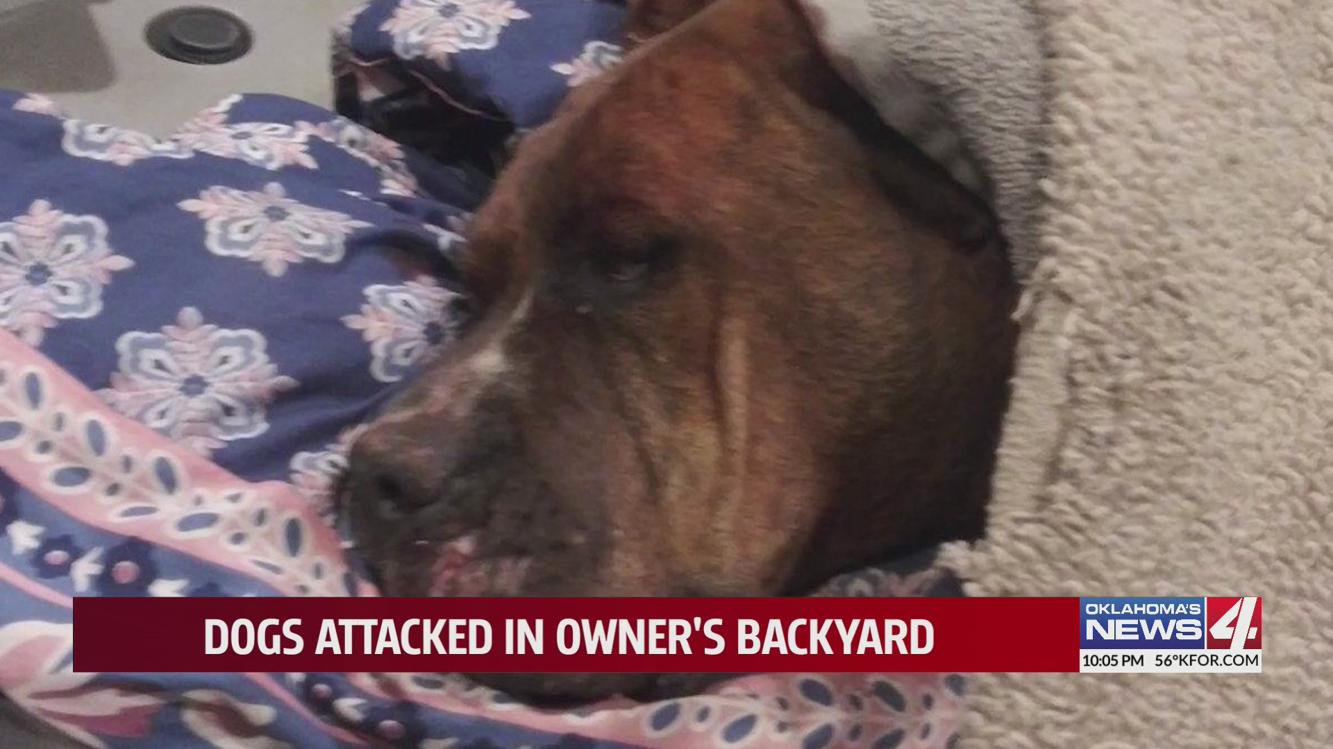 Genesis at the vet following brutal attack by neighbor